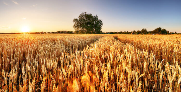 Wie viel Dealpotenzial steckt in der Food- und Agrarbranche? Die M&A-Beratung Squarefield glaubt, so viel, dass sie sogar ein eigenes Team in Deutschland aufbaut.
