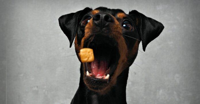 Der Finanzinvestor Hellman & Friedman bietet 2,8 Milliarden Euro für den Online-Tierbedarfshändler Zooplus. Foto: gismo2015 - stock.adobe.com
